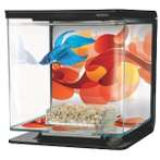 BETTA KIT SUN SWIRL THEME 2L 13350